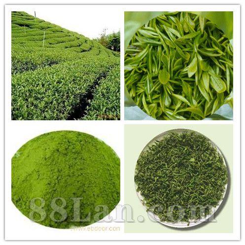 绿茶提取物 茶多酚95%