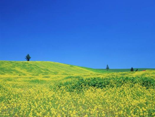 88蓝琳达:阳光四月 我要开花