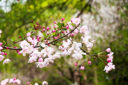 88蓝-大飞:四月春暖花开,最美人间
