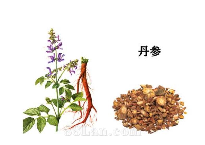 丹参提取物 食品原料 厂家直销 陕西宏达